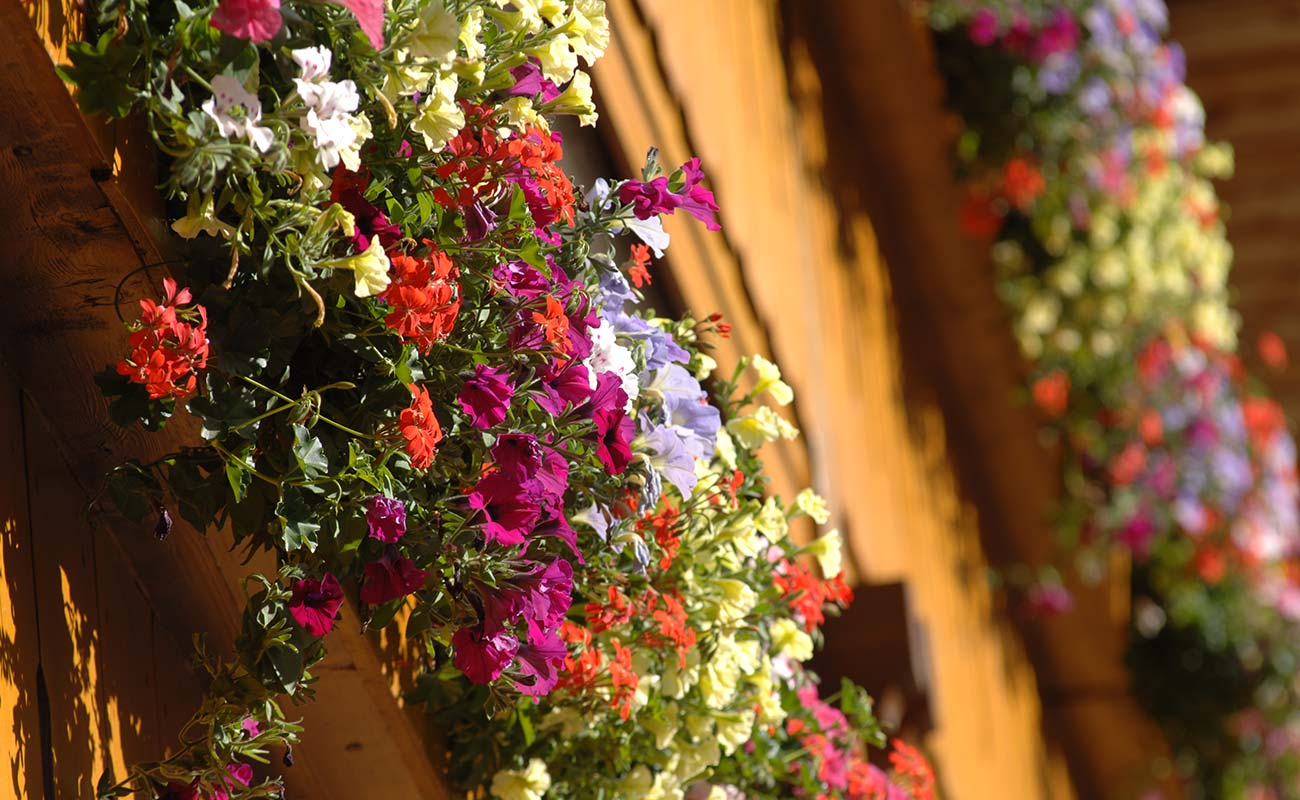 Flowers of different colors on a Balcony